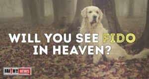 Will You See Fido In Heaven?